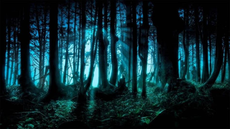 (Топ-10 найзагадковіших лісів у світі)
