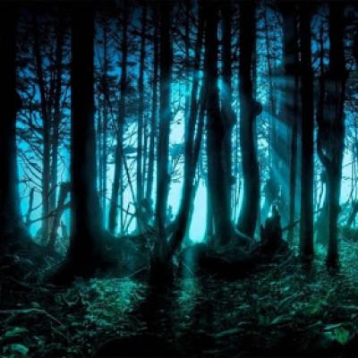 Топ-10 найзагадковіших лісів у світі